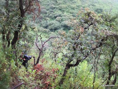 Ascendiendo el Cerro García por una vereda hecha por camoteros en el bosque subcaducifolio