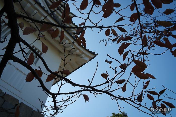 Détail d'architecture et feuillage de sakura à l'automne, Château de Fukuyama, Hiroshima-ken