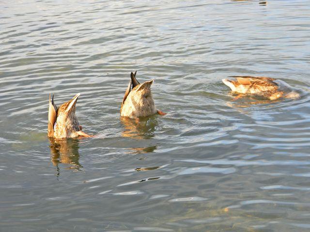 Niesulice, Niesłysz, jezioro, woda