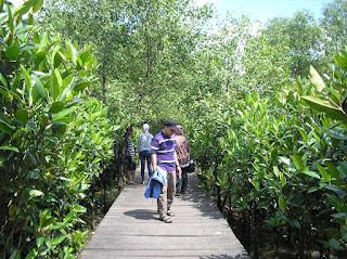 Melihat Kilas Indahnya Hutan Mangrove Nguling Pasuruan Yang Asri