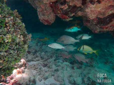 Peixes e corais no fundo das piscinas naturais, em Maragogi