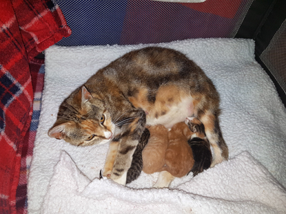 Betty and her kittens