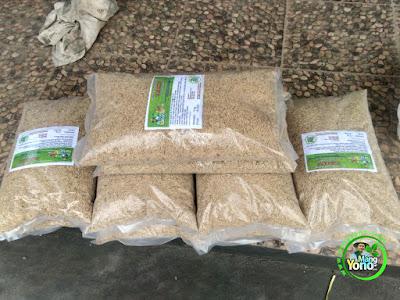 Petani Pagaden Barat, Subang, Jabar   Pembeli Benih Padi TRISAKTI 75 HST Panen.  50 Kg atau 10 Bungkus