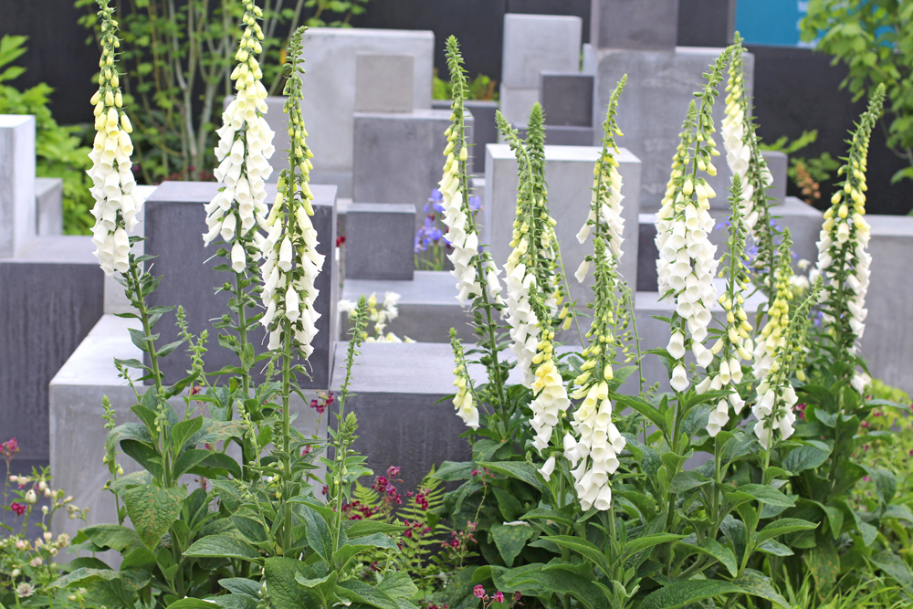White foxgloves at Chelsea Flower Show 2018 - London lifestyle blog