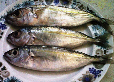 Ikan Lehoma