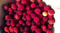 fruit around the world, strange fruit, strange fruit around the world, crazy fruit, crazy fruit around the world, fruit around the world, strange fruit, strange fruit around the world, crazy fruit, crazy fruit around the world, STRAWBERRY TREE FRUIT