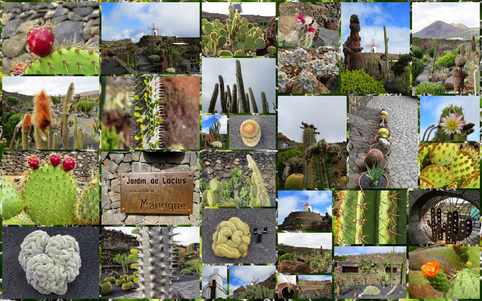 What to do in Lanzarote in January: Jardin de Cactus on Lanzarote