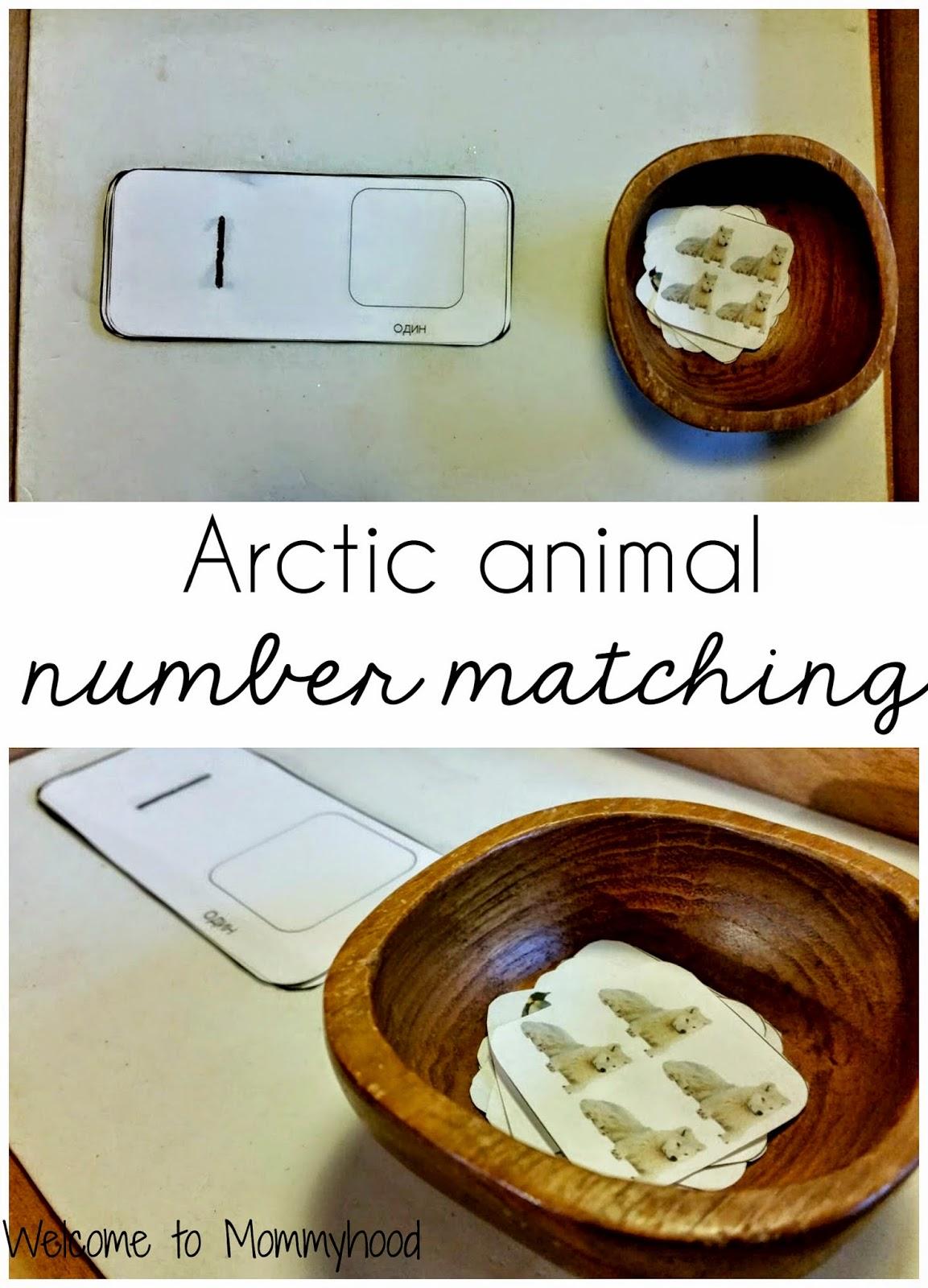 Montessori Arctic Animals Activities