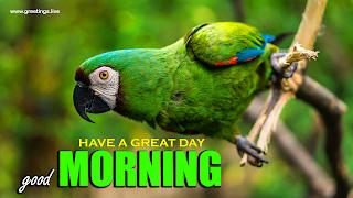 "Beautiful guacamaya Bird ""good morning"" wishes message Image"