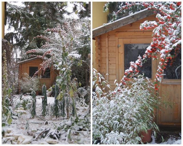 Schnee auf den Früchten des Feuerdorns