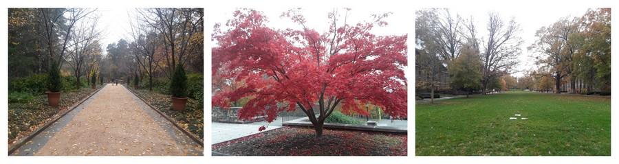 Duke aux couleurs de l'automne