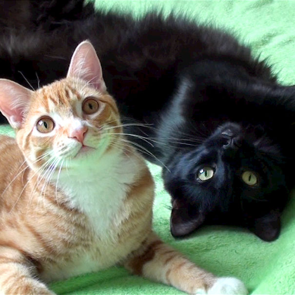 Cole And Marmalade,Two Rescued Kitties that Became Youtube Celebrities