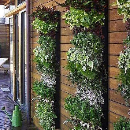 vertical garden terbaik