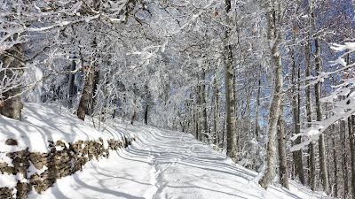 Verschneiter Weg mit Spuren beim Weissenstein