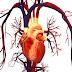 Media Pembelajaran Anatomi Jantung Manusia