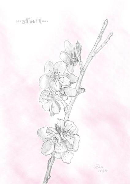 Kirschblüten Sketch