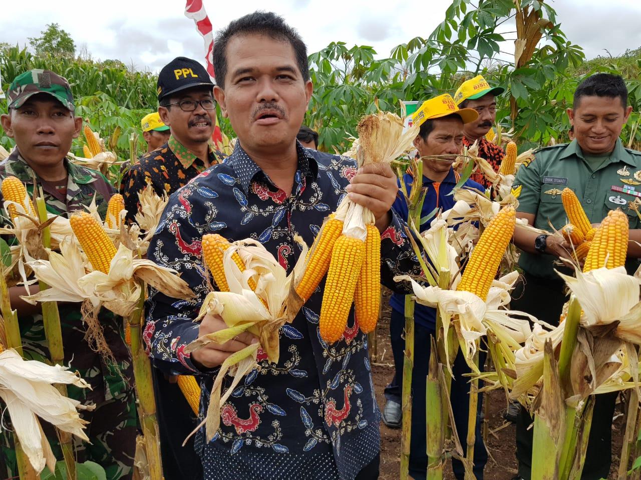 Wonogiri Panen Raya Jagung 37.026 Hektar di Lahan Berbatu