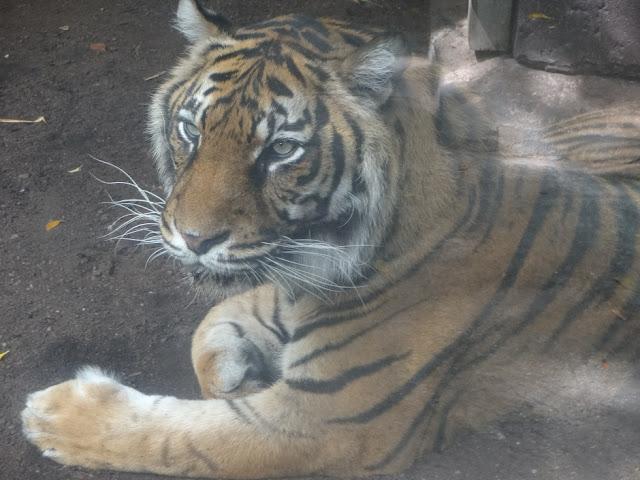 A Trip To The Zoo | Bioparc Fuengirola 11