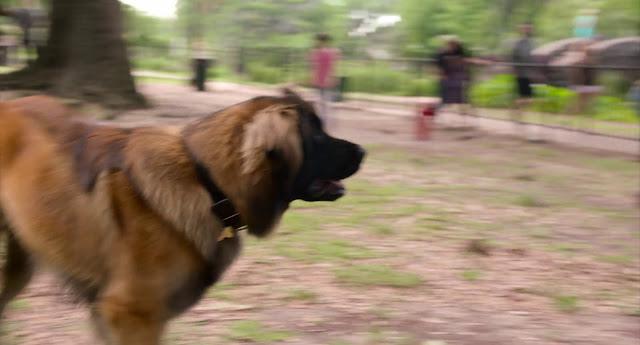 Think Like a Dog 720p latino