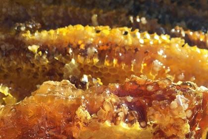 Manfaat madu asli untuk kesehatan tubuh manusia