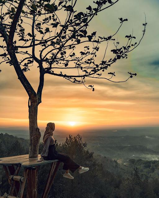 Paket tour jogja - Hutan pinus Asri Yogyakarta