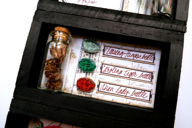 Canvas Beetles in DIY Specimen Tray by Dana Tatar