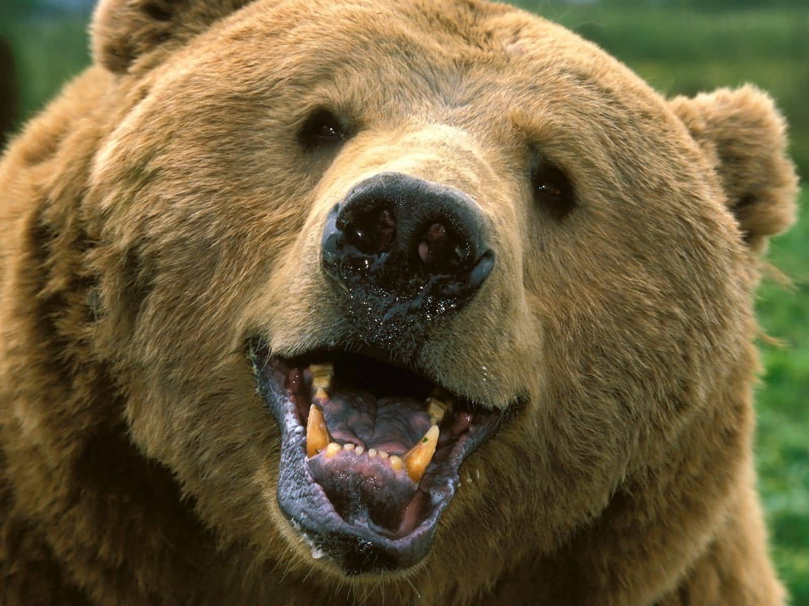 The Burpee Experiment: Grin And Bear It