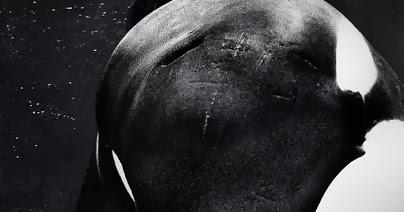 Blackfish documentary