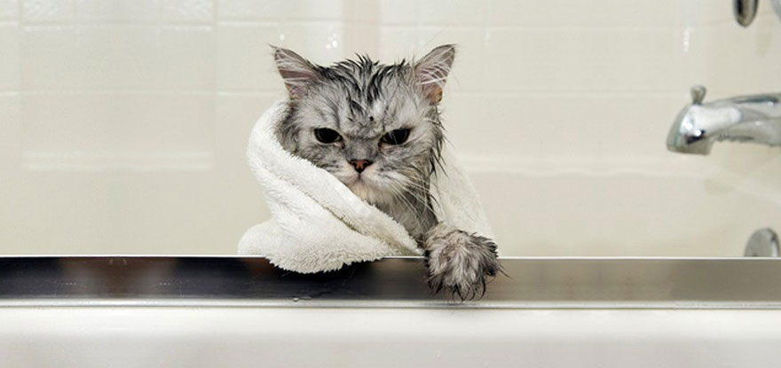 funny-wet-cats-3