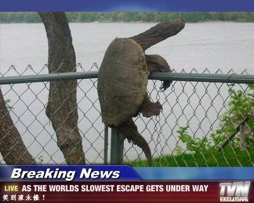 NINJA TURTLE IN REAL LIFE