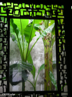 Banana plants, through the window of a Chinese garden