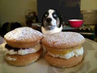 Cream cakes dog