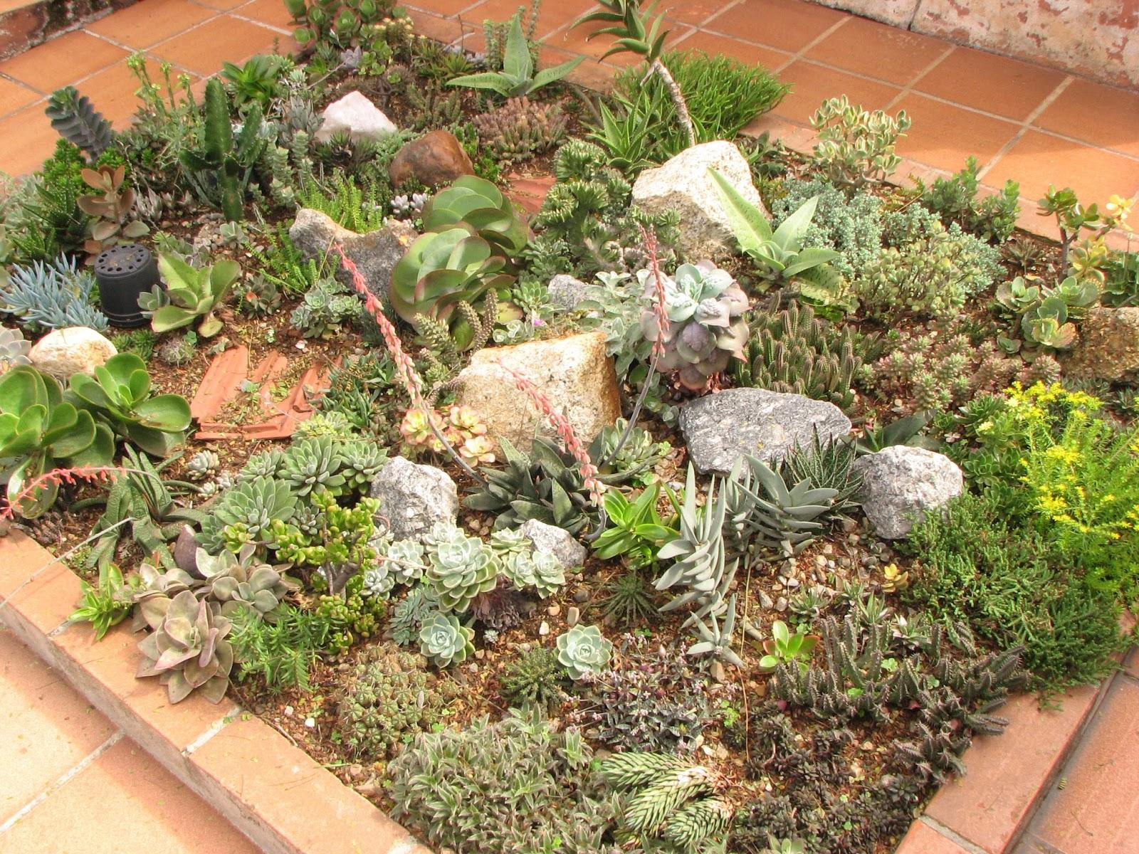 Plantas suculentas  Marcus Corradini