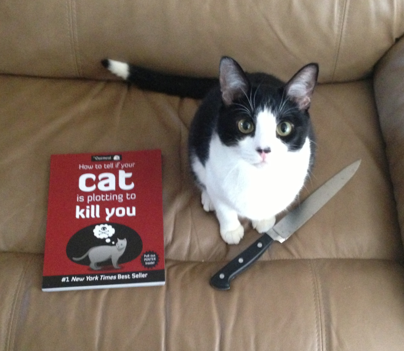 How To Kill A Cat And Get Away With It
