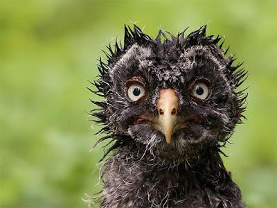 animale-poze-imagini-foto amuzante