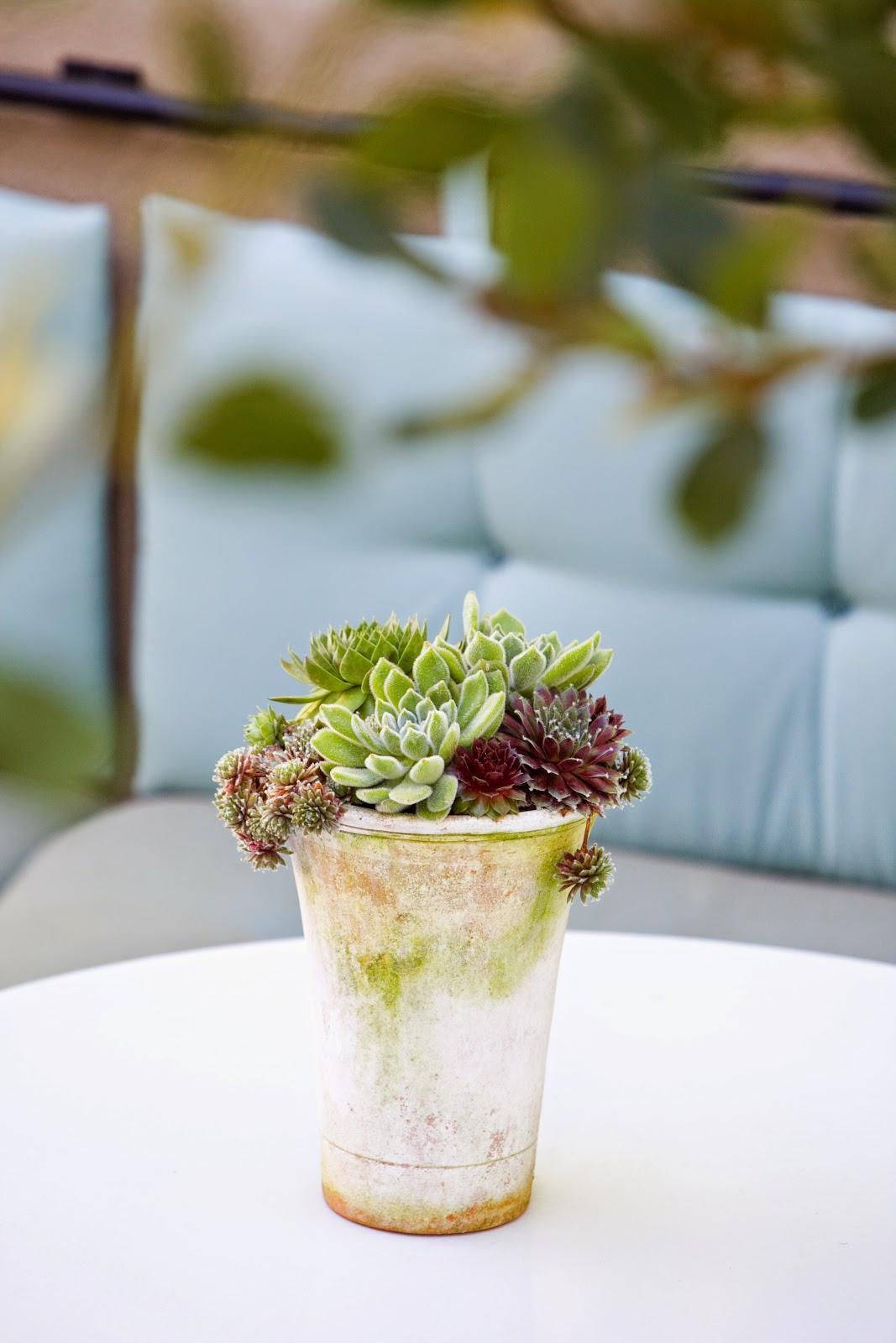 Ciao Newport Beach: Molly Wood Garden Design