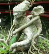 tanaman hias buah, tanaman hias bunga, nama tanaman hias akar, tanaman hias akar bonsai, tanaman hias akar beringin, tanaman hias akar serabut, tanaman hias akar adenium, tanaman hias akar contoh