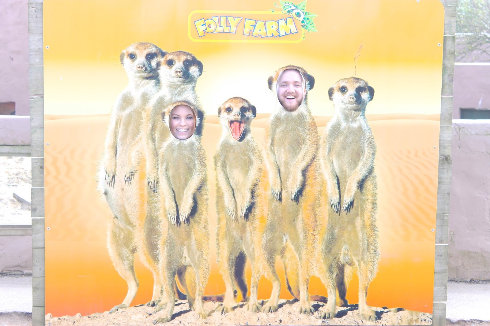 folly farm review, folly farm wales