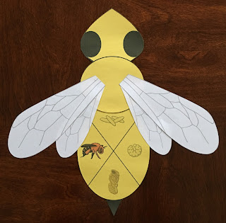 https://www.teacherspayteachers.com/Product/Honey-Bee-Life-Cycle-Craft-2808252