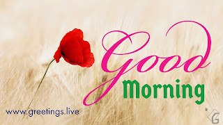 Latest-Good-morning-Flowers-greetings-HD