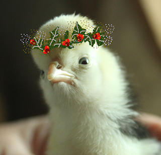 Polish Chick in a festive crown