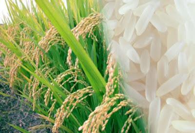 Cara mencerahkan wajah menggunakan beras