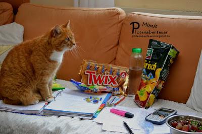 Katze Mimi umgeben von vielen Süßigkeiten und Lernstoff für die Abschlussprüfung