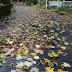 Reasons to Love the Fall Season
