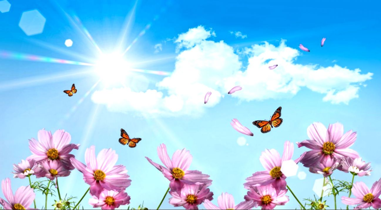 Background Flowers Images Hd Merger Wallpapers
