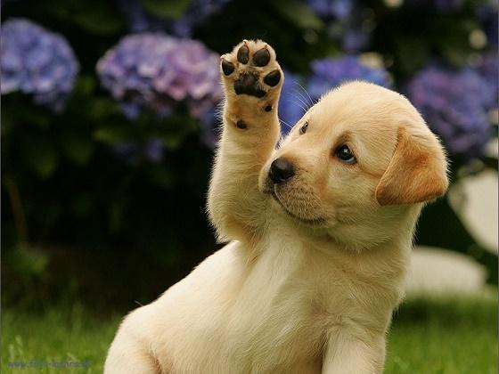 5 cách giúp cún cưng thông minh hơn