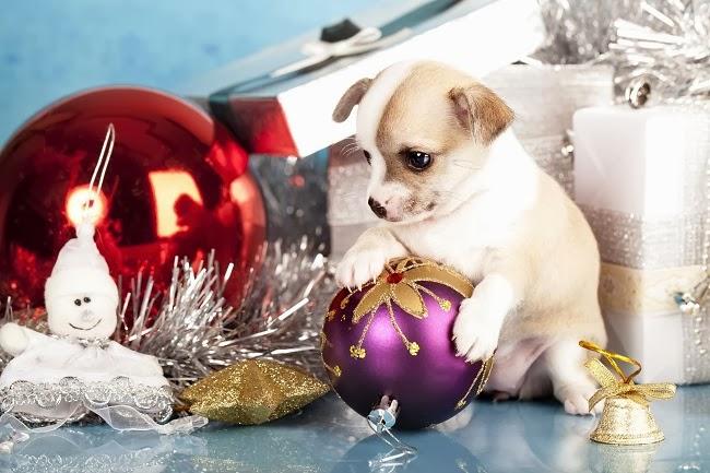 Jaki prezent dać psu pod choinkę