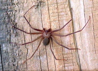 Phanblogs Câu chuyện của nhện