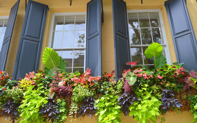 Pretty Window, Window Boxes