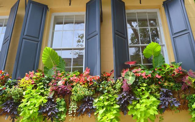 Pretty Window, Window Boxes